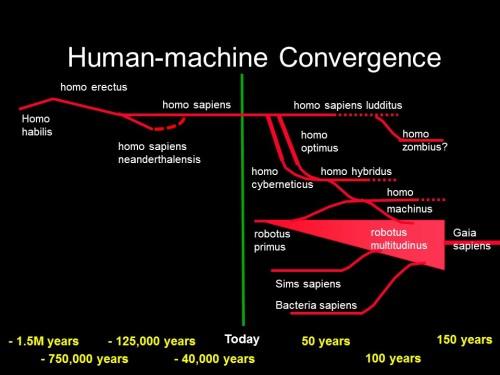 human evolution 3